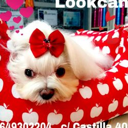 productos y complementos para perros en sevilla